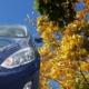 Die stadtmobil Fotoaktion im Herbst